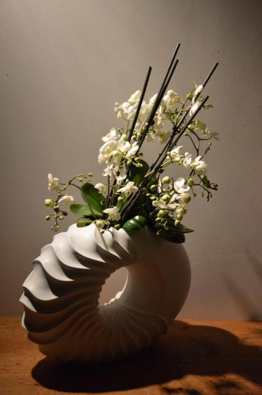 orchidées mini et pot nautilus