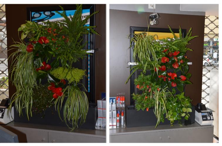Murs vegetalises 2