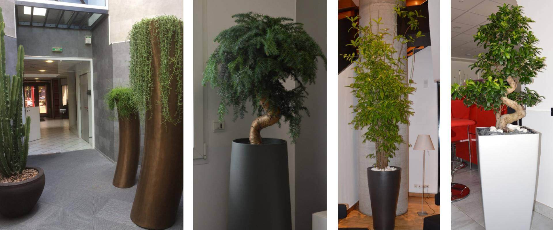 Plantes interieures
